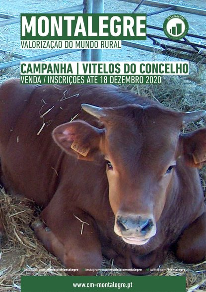 montalegre___valorizacao_do_mundo_rural___venda_de_vitelos_do_concelho__2020_